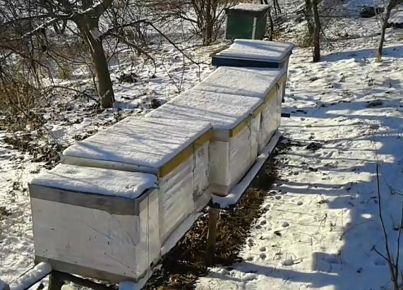 пчелы бакфаст карника итальянка зимовка 2016 2017