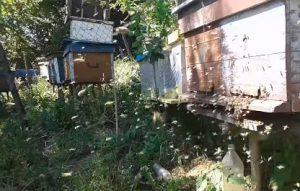 Облет пчел зимой или ранней весной - нужен ли он