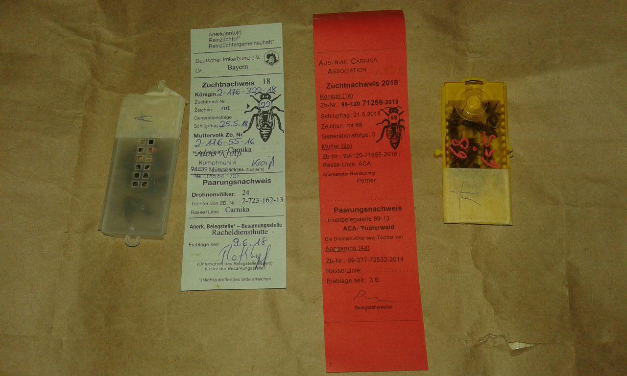 Кроіс Карніка з ізольованого облітника Німеччини