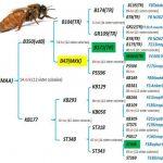 Родоводы пчеломаток Родоводи маток
