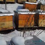 Дом пчелы Многокорпусный улей
