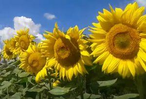 Послуги платного запилення бджолами від Херсону до Сум і від Києва до Харкова