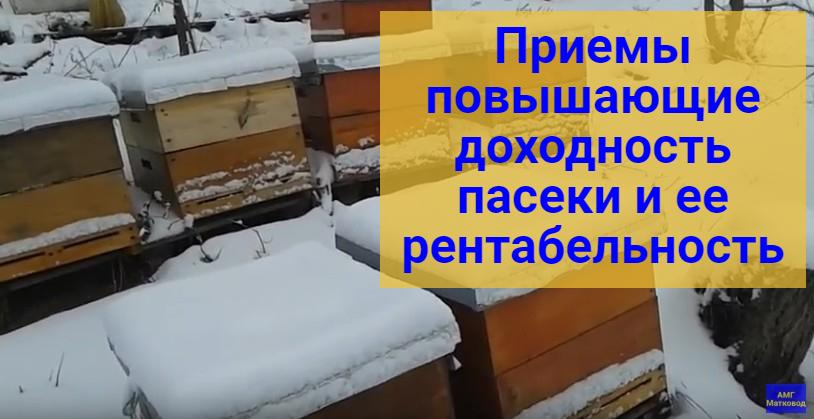Как повысить рентабельность пасеки в Украине