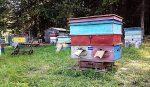 Пчеловодство и метод