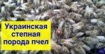 украинская степная пчела купить