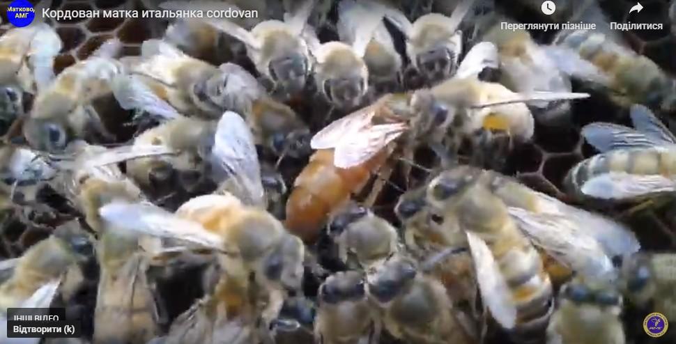 Світовий економічний ефект від бджолозапилення До $ 500