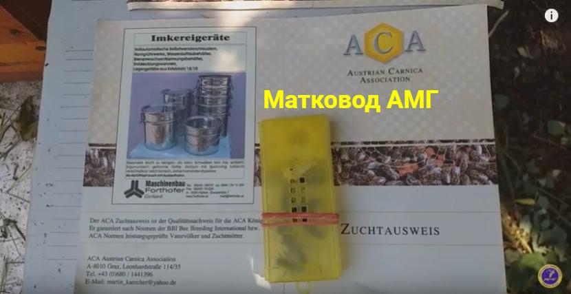 Карніка Лампрехт з Австрії, Паспорт бджоломатки