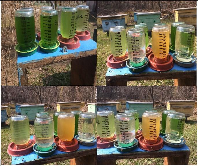 хлорелла додавання в поїлки для бджіл