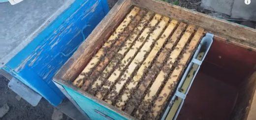 Весняні роботи на пасіці, Бджоли Навесні, Що робити