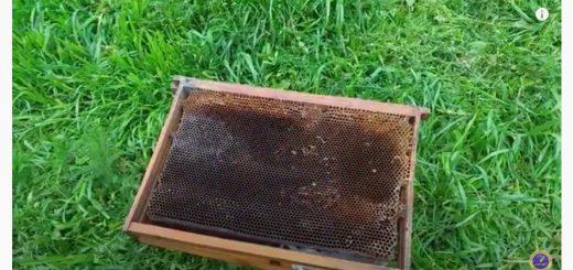 Суш для бджіл, суш для пчел, суш для роївень, суш бджолина, суш пчелиная, купити суш, продам суш,
