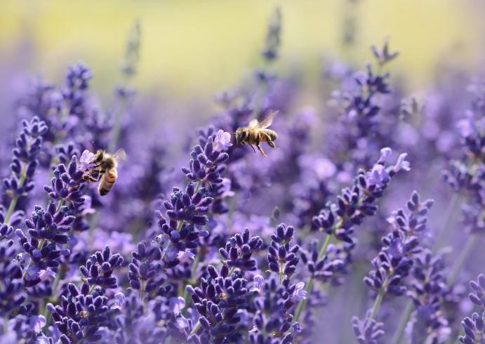 прикольні картинки про бджіл