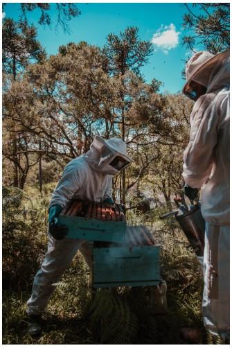 Фотографія бджолярі, пасічники